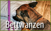 bettwanzenspuerhunde judith federmann